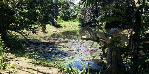 Забронировать Colo-I-Suva Rainforest Eco Resort