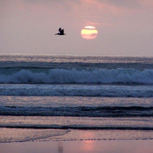 фото Shorebird Condo 415649975