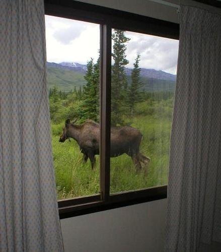 фото Denali Park Hotel 415684913