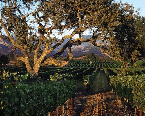 фото Fess Parker`s Wine Country Inn & Spa 488344339