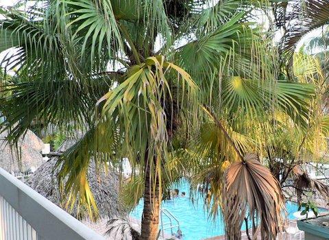фото Floridian Hotel 488360162