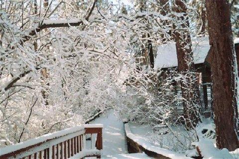 фото Cozy Hollow Lodge 488773883