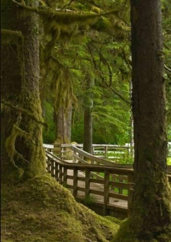 фото Glacier Bay Lodge 596912709