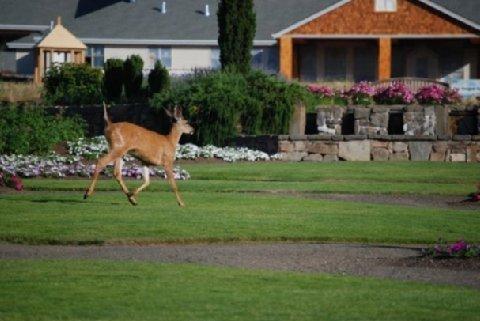 фото Oregon Garden Resort 610958273