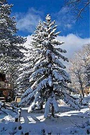 фото Four Seasons Inn 668585368