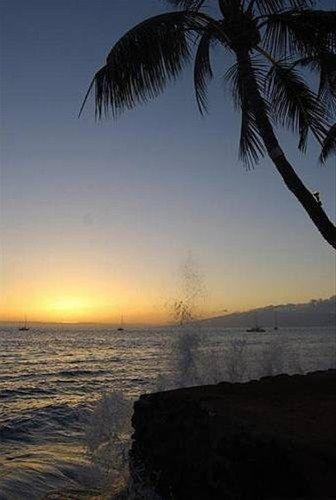 фото Lahaina Oceanfront Estate 668651586