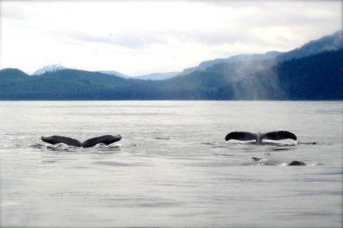 фото Wild Alaska Inn 668745513