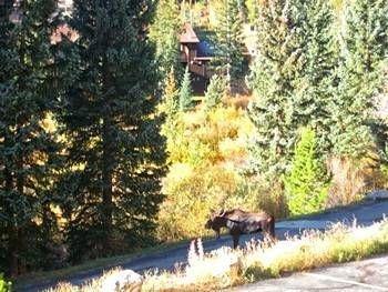фото Buffalo Ridge - Unit B104 693528957