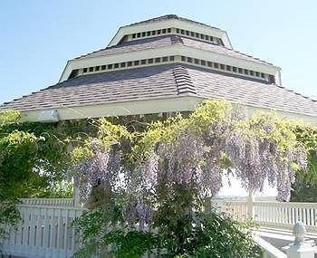 фото Wild Rose Manor 783313635